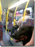 Milo on the bus